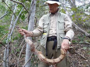 Serra da Capivara WCM & boa constrictor (2)