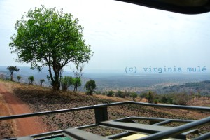 The famous rolling hills of Rwanda give Akagera a distinctive look in comparison to other savanna parks.