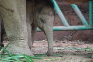 Sahm investigating uses for his trunk. Photo by: Lisa Barrett