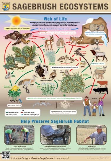 Sagebrush Ecosystem Poster_dpi