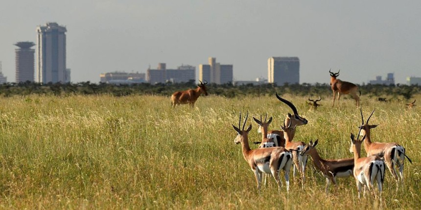 the-nairobi-national-park