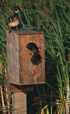 wood-duck-box
