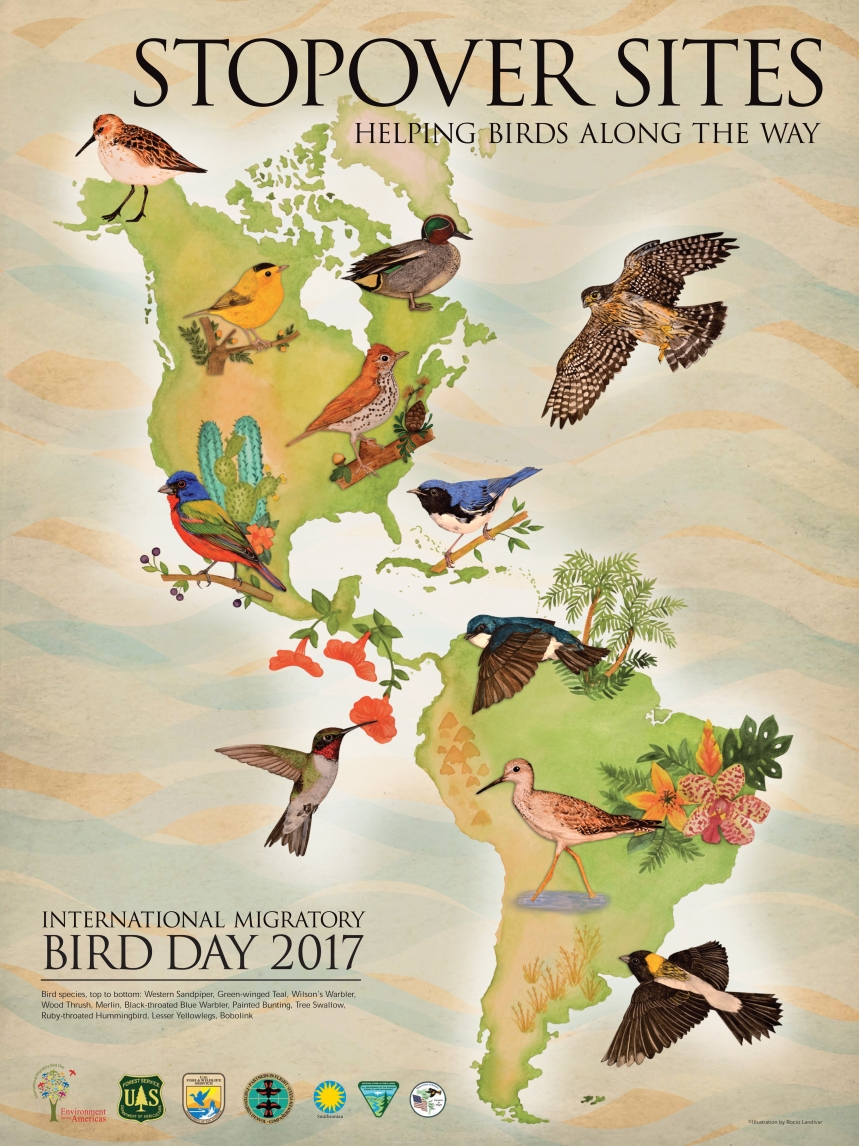 EFTA ENG Bird Migration Poster 18X24 2017 R10